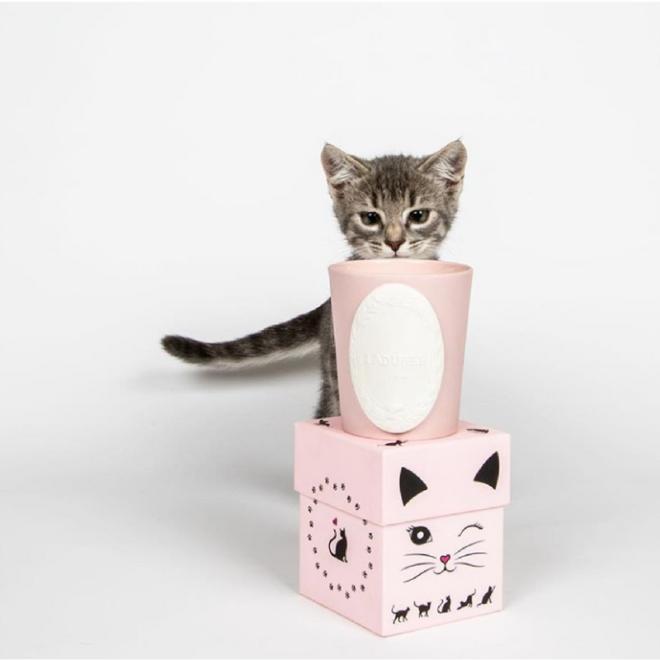 bougie-la-duree-cadeaux-gourmand-lovely-cat