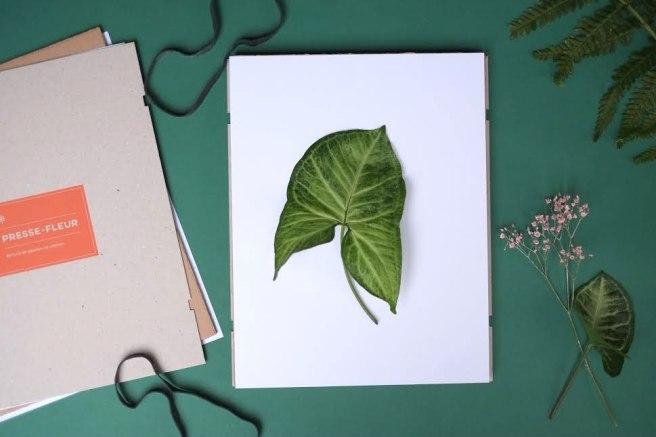 specimen-herbier-12