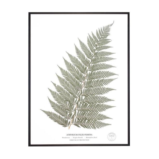Herbarium fougere sechee cadre