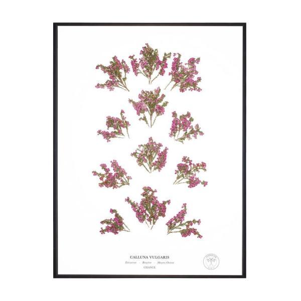 Herbarium fleurs decoration0