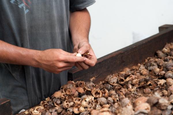 Intuitu materiae huile tamanu bio naturelle vergetures soin 10.jpg